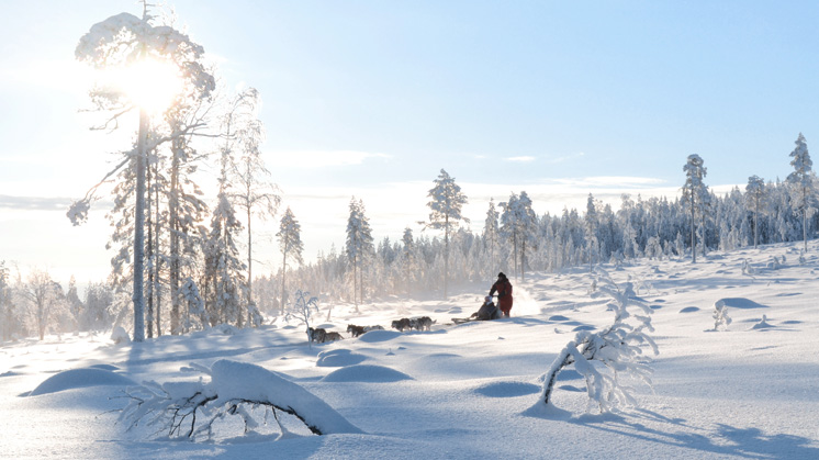 Winterzauber in Lappland I Rundreise